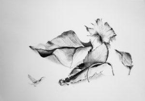 Kohlezeichnung von Blättern